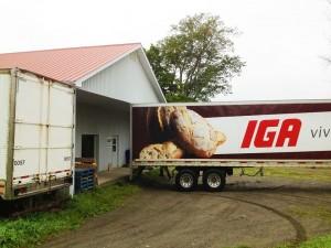 achat d'ail frais par la chaîne IGA