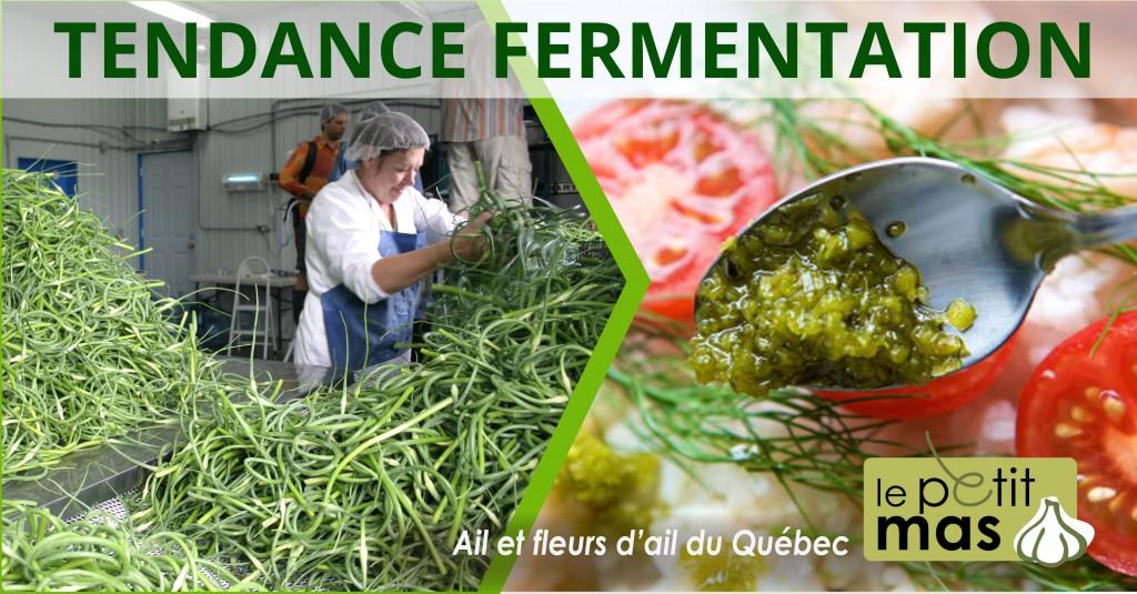tendance fermentation : délicieuses fleurs d'ail fermentées