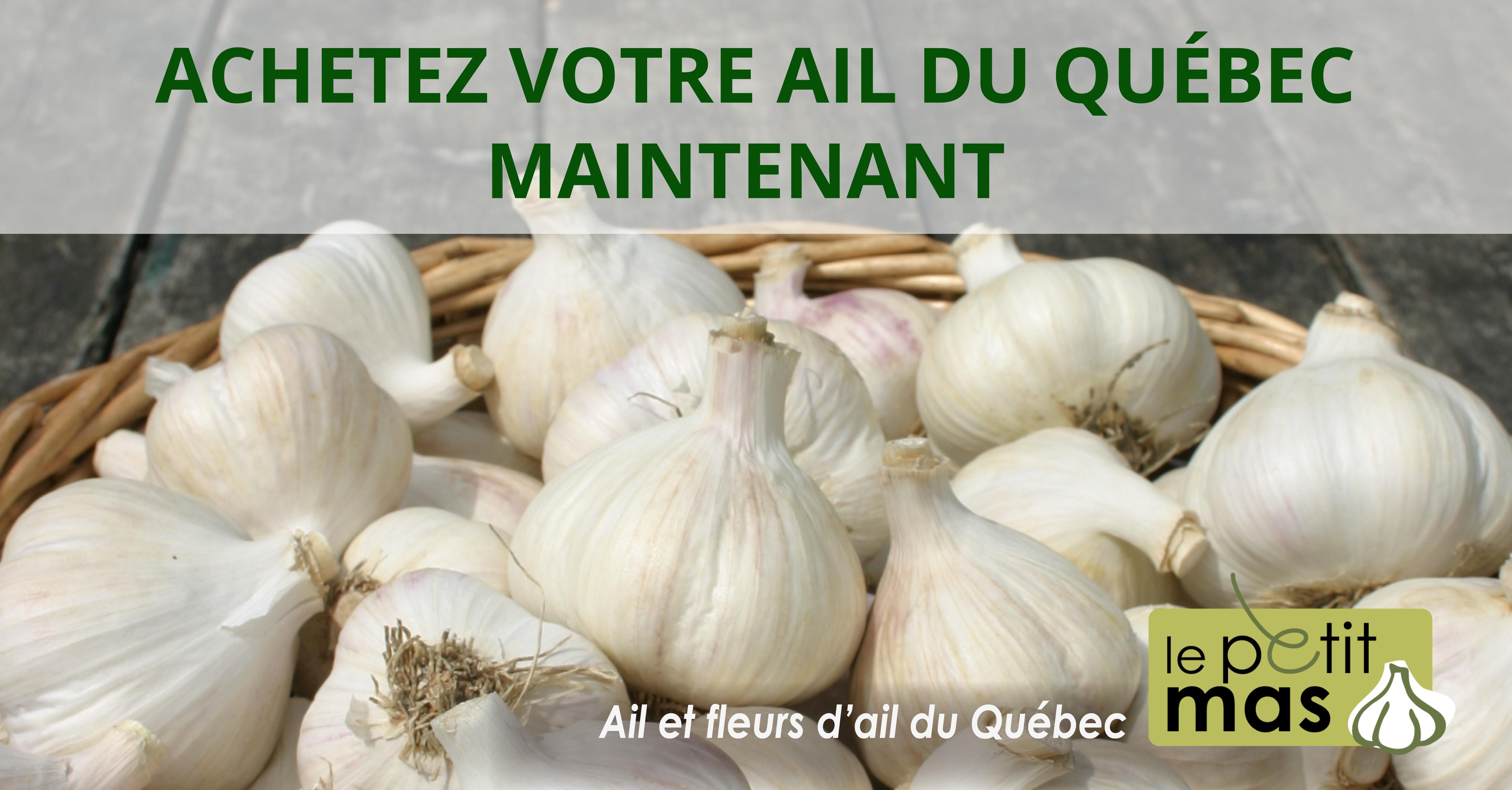 Achetez votre ail du Québec maintenant