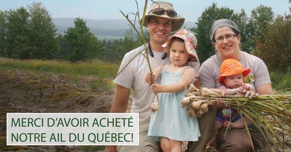 Ail du Québec récolte 2015