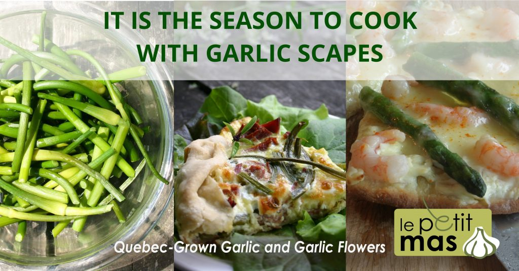 it is the season to cook with garlic scapes