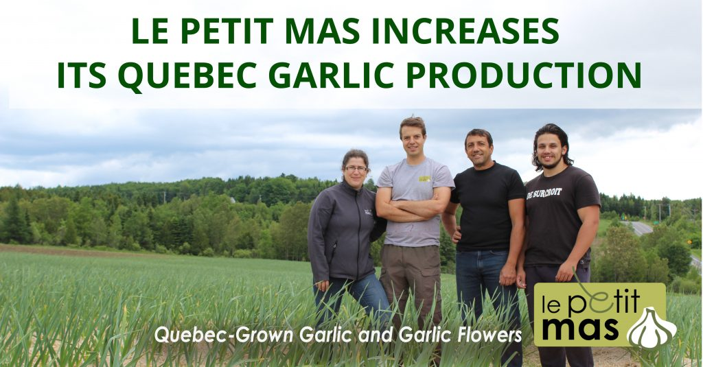 Expansion of Our Agribusiness: Le Petit Mas Increases Its Quebec Garlic Production