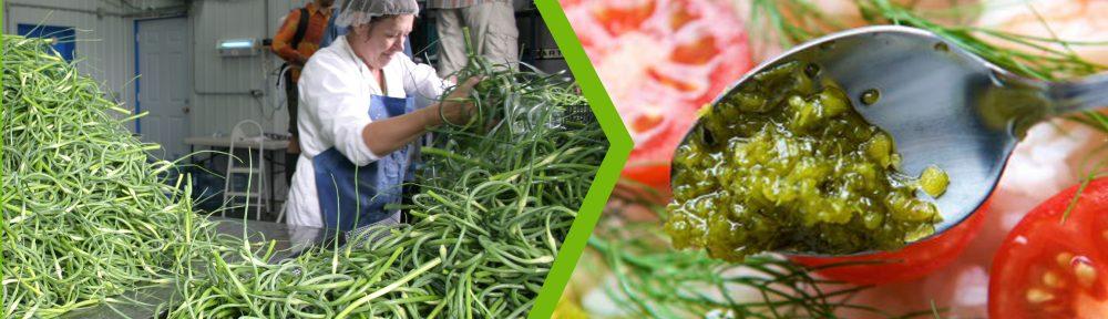 fermentation trend - fermented garlic flowers
