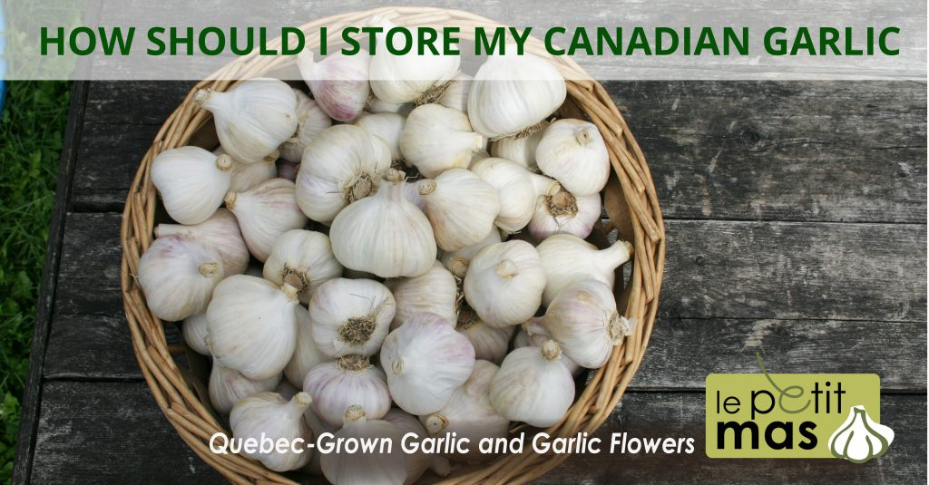 how should i store my canadian garlic