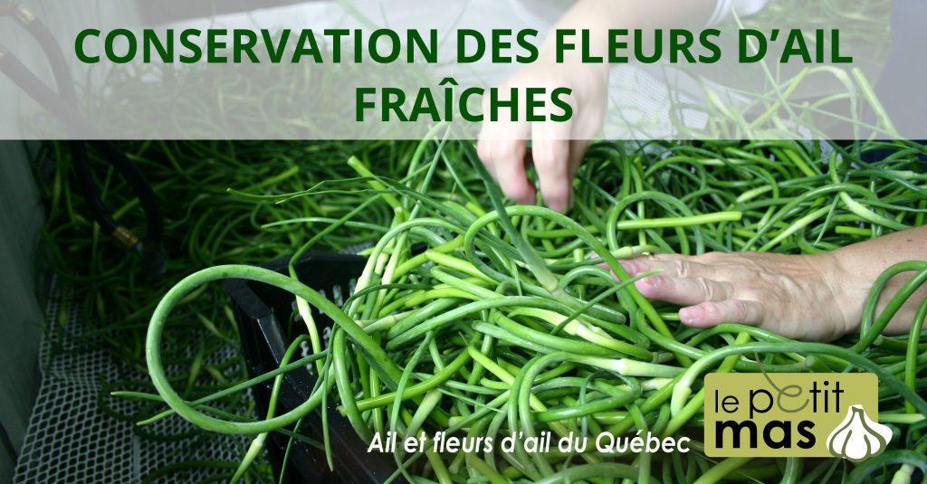 conservation des fleurs d'ail