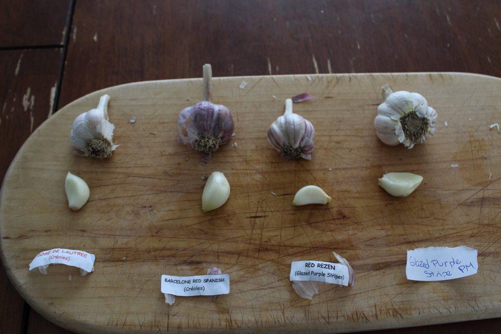 dégustation de variétés d'ail du Québec