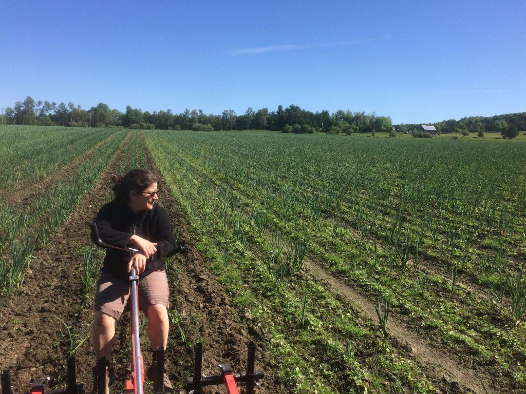 sarclage mecanique - gestion biologique des mauvaises herbes - production d'ail biologique au Québec - Le Petit Mas