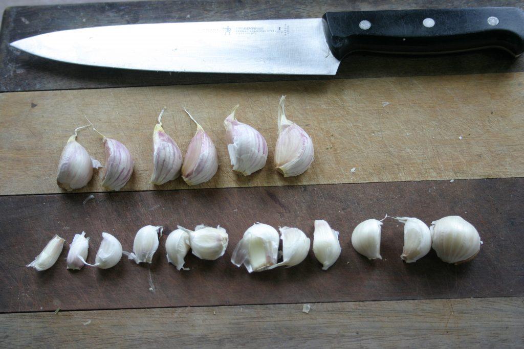 taille des gousses - variété d'ail du Québec