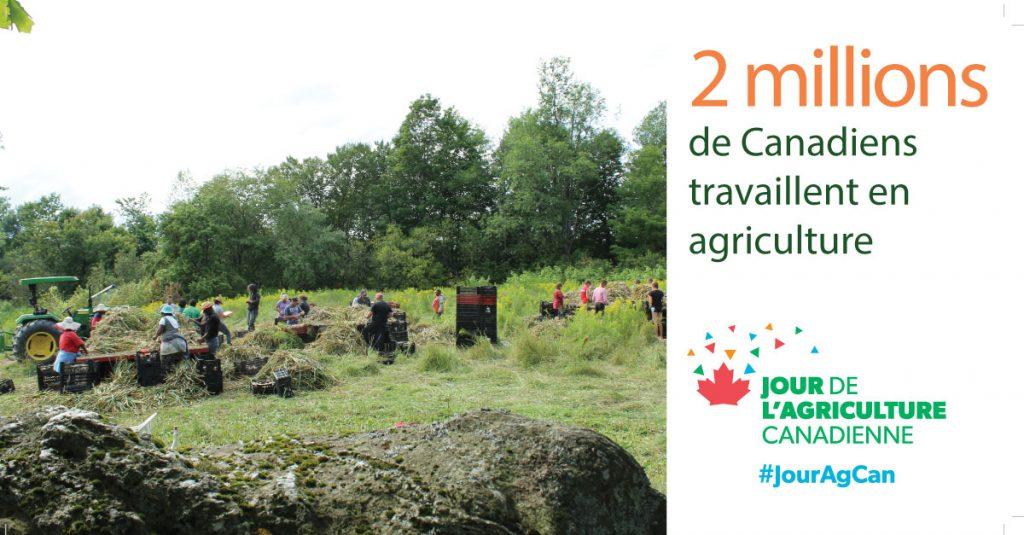 Journée agriculture canadienne - Le Petit Mas producteur d'ail biologique